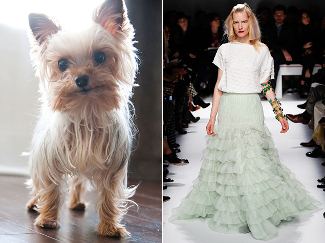 Shamrock in our cute dog contest, left, and a favorite look from Schiaparelli's couture show via style.com