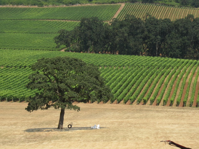 Stoller Family Vineyards in Willamette Valley; phots by Hayley Hamilton Cogill