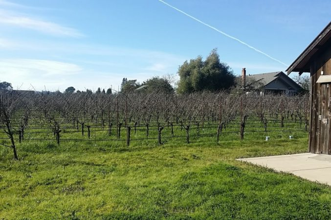 Inman Family Vineyards; photo by Hayley Hamilton Cogill