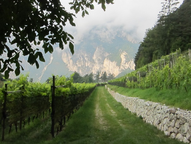 Tieffenbrunner Vineyards in Alto Adige; photo by Hayley Hamilton Cogill