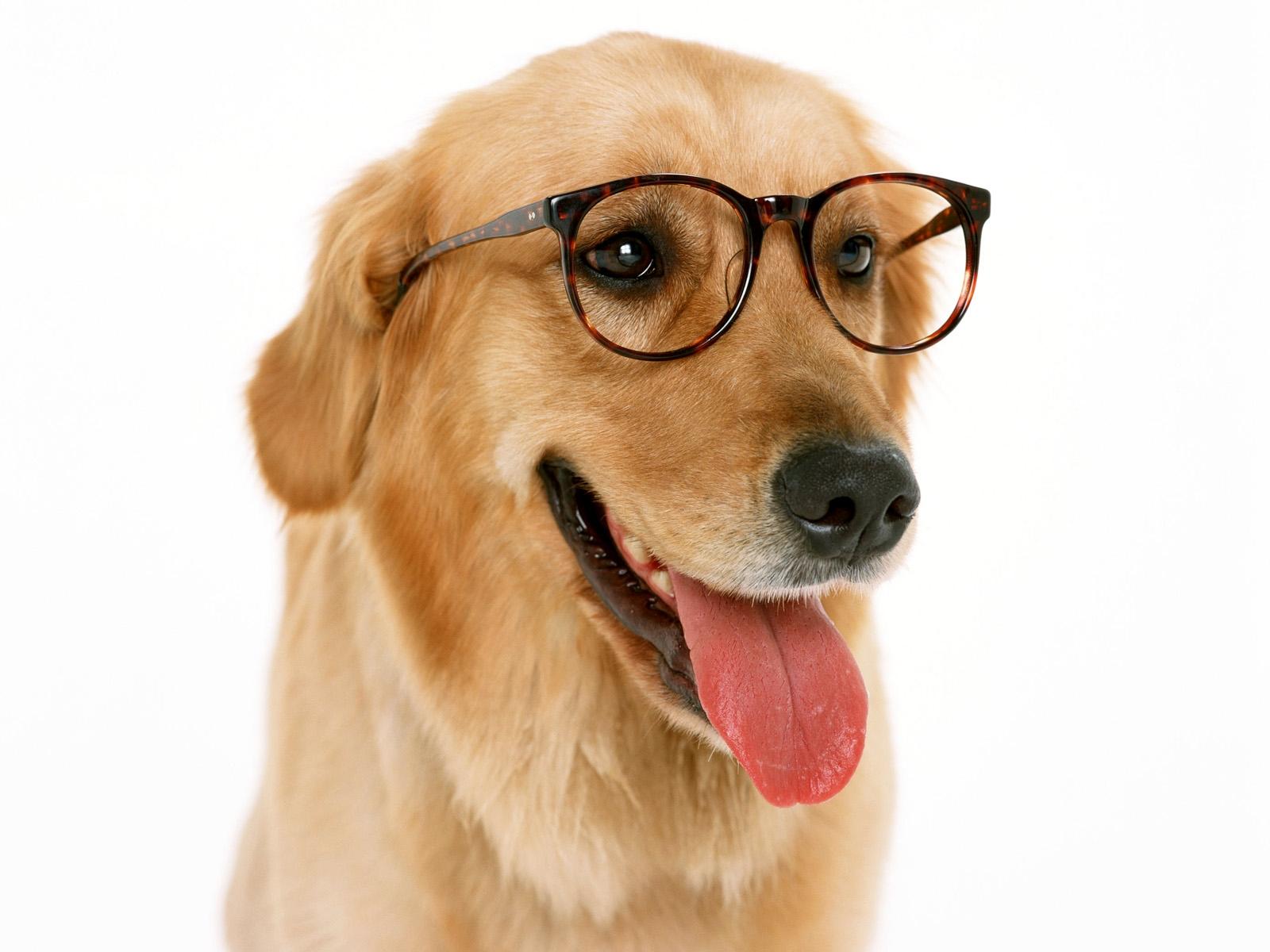 dog-apps