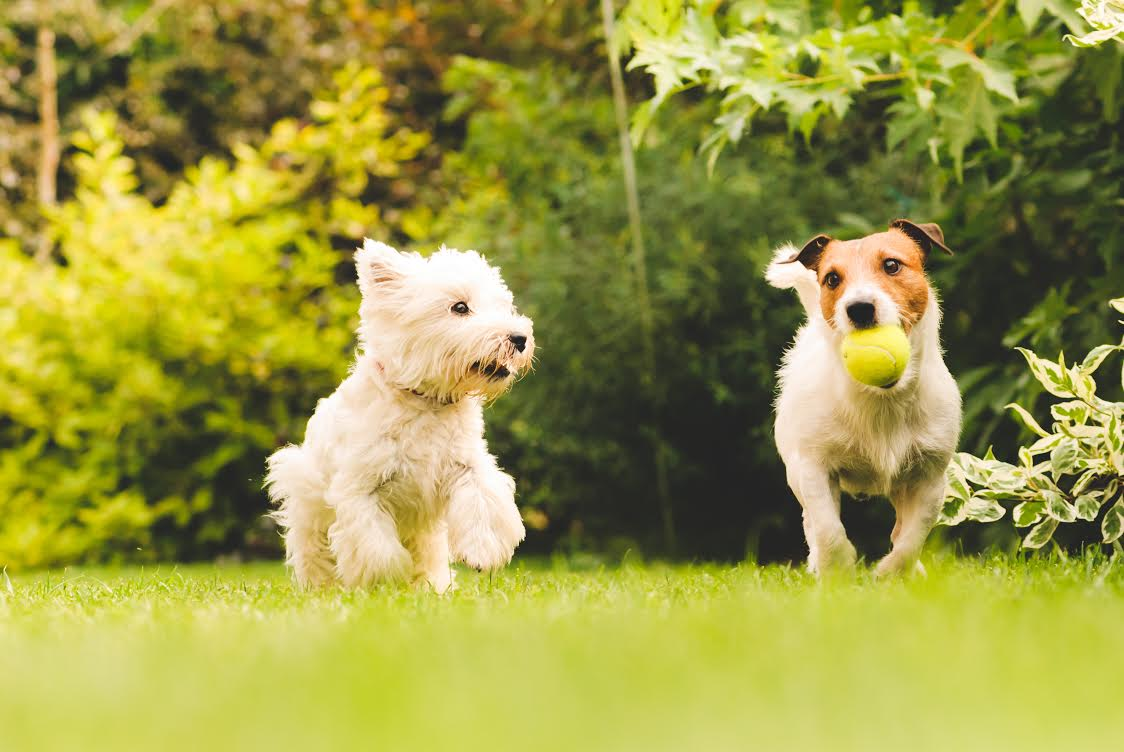 Dogscaping: 6 Ways to Create a Pet-Friendly Backyard - D ...