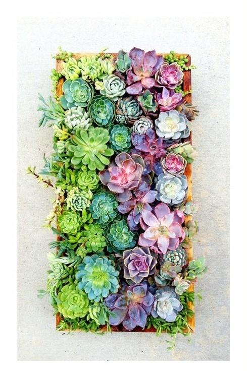 Living Artwork How To Construct A Vertical Succulent Garden D