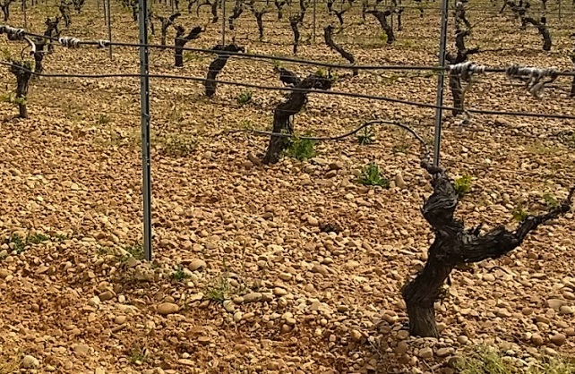 Bodegas Mauro rock filled Tempranillo vines