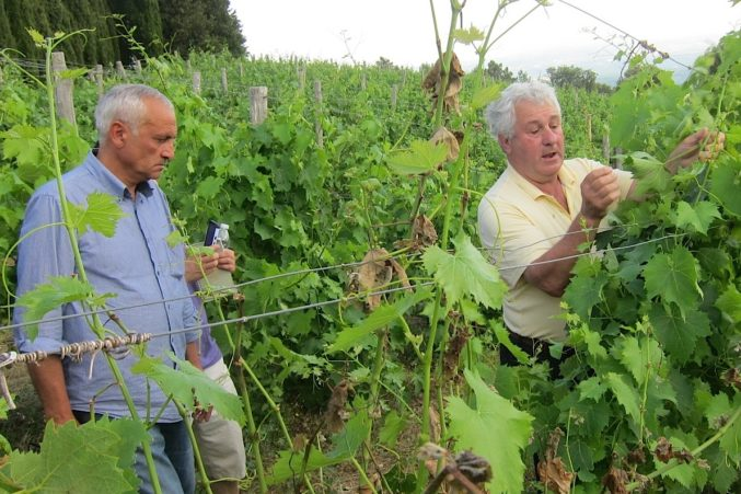 Vineyard manager, Michele Pezzicoli (left) with Seillan inspecting the vines of their newly acquired, high elevation vineyard.