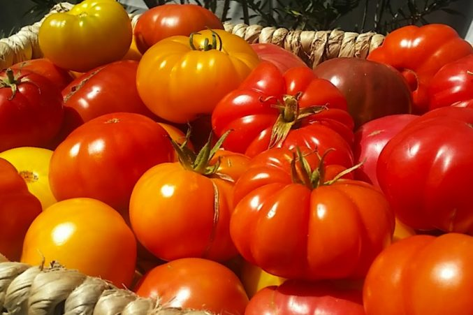 Heirloom tomatoes from Kendall-Jackson Winery's sustainable garden
