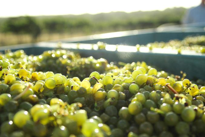 Brennan Vineyards Semillon; photo courtesy of Brennan Vineyards