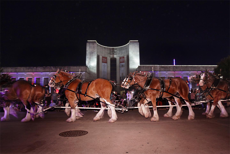 state-fair-horses
