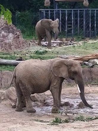 Baby elephants at the Dallas Zoo; photo by Hayley Hamilton Cogill