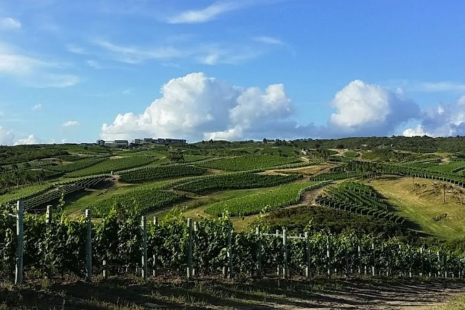 Bodega Garzon vineyards in Uruguay; all photos by Hayley Hamilton Cogill