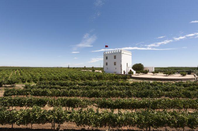 Esporao Vineyards, photo by Hayley Hamilton Cogill