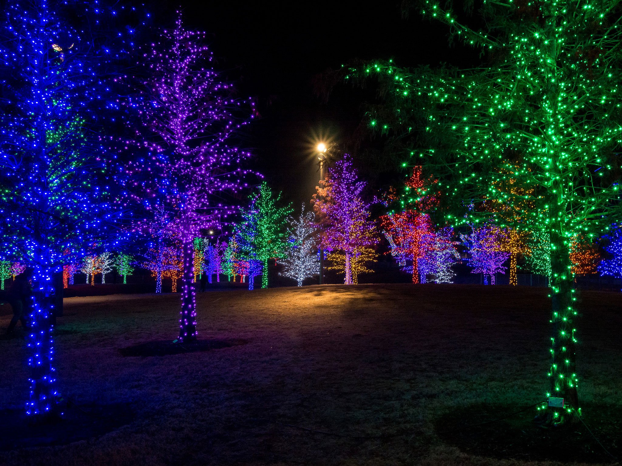 Prestonwood Christmas Show.Where To See The Best Christmas Lights In Dallas D Magazine