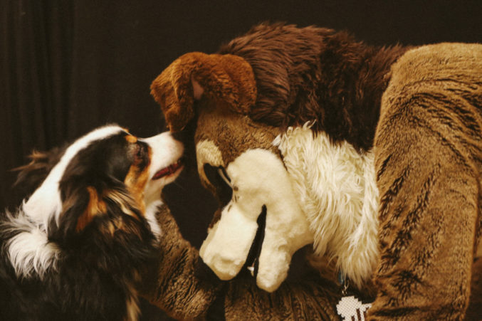1525e9e84abd Getting to Know My Brother s Fursona at Texas Furry Fiesta - D Magazine