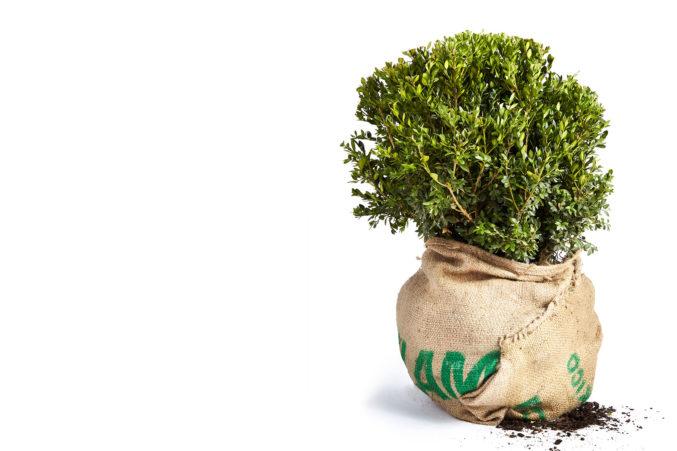 How To Grow A Garden In Dallas D Magazine