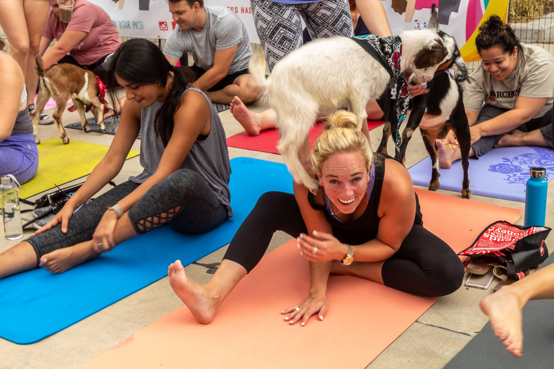Goat Yoga And Dallas Are Meant For Each Other D Magazine
