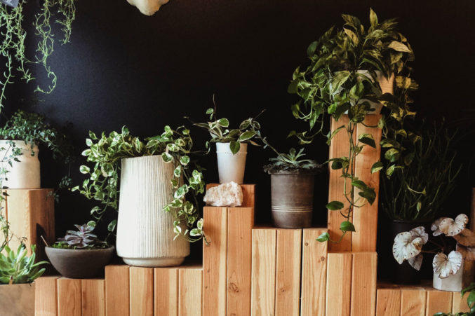 5 Cool Houseplant Options That Aren't Succulents - D Magazine Houseplant Greenhouse on floral greenhouse, botany greenhouse, snow greenhouse, outdoor greenhouse, bonsai greenhouse, gardening greenhouse, white greenhouse, horticulture greenhouse, conservatory greenhouse, tree greenhouse, green greenhouse, indoor greenhouse, vegetable greenhouse, plants greenhouse, spring greenhouse, weed greenhouse, tropical greenhouse, container greenhouse, nursery greenhouse, home greenhouse,