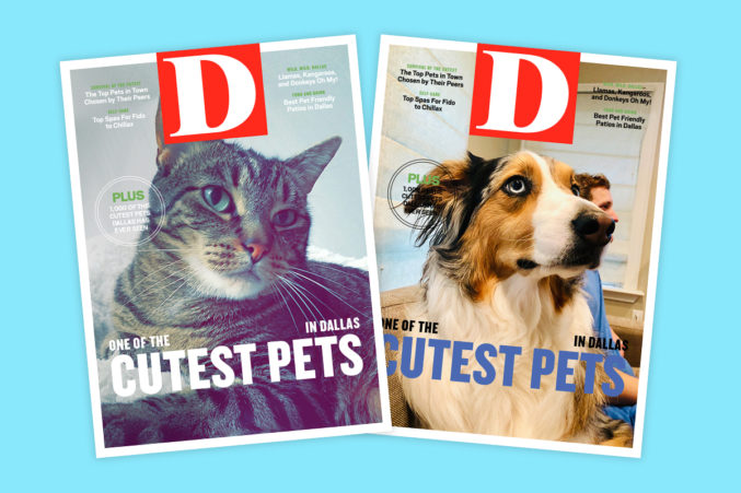 D Magazine's Cutest Pets 2019 Is Live: We Want Your Dogs