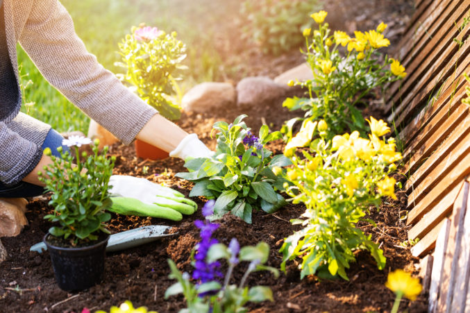 6 Lawn Care Services to Take Your Yard to the Next Level - D