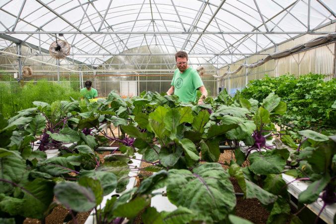 Profound ventilated greenhouse
