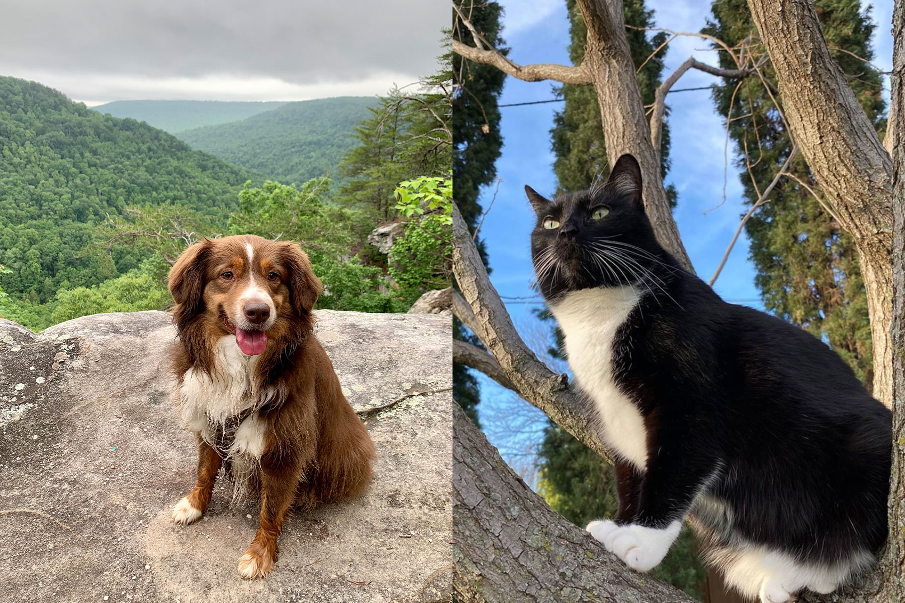Meet The 2020 Winners Of Our Cutest Pets In Dallas Competition D Magazine