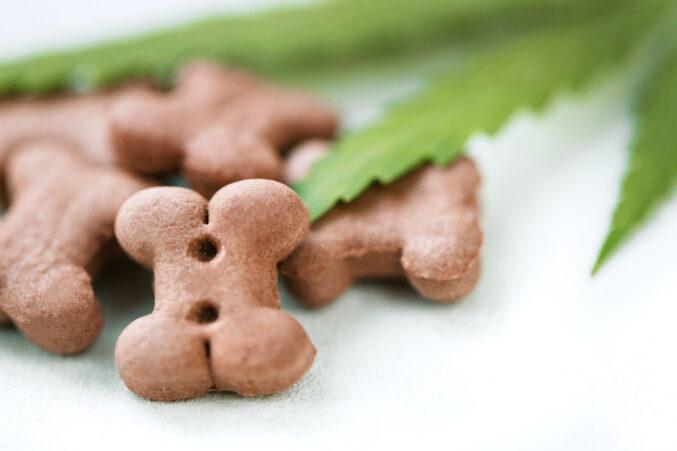 Best CBD Dog Treats: Organic Hemp Treats - D Magazine