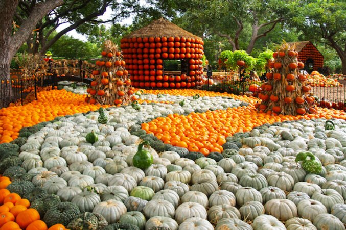 pumpkin-village