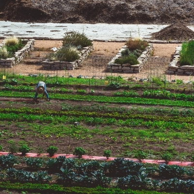 An top-down angle of the urban farm called F.A.R.M. (which stands for Farmers Assisting Returning Military); in the image is a farmer tending to rows of vegetables.