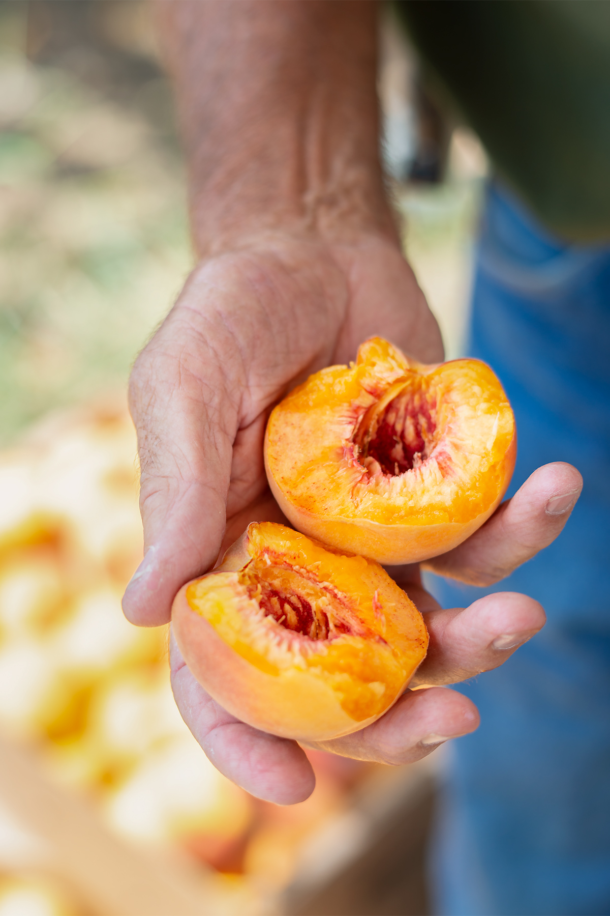 ham orchards