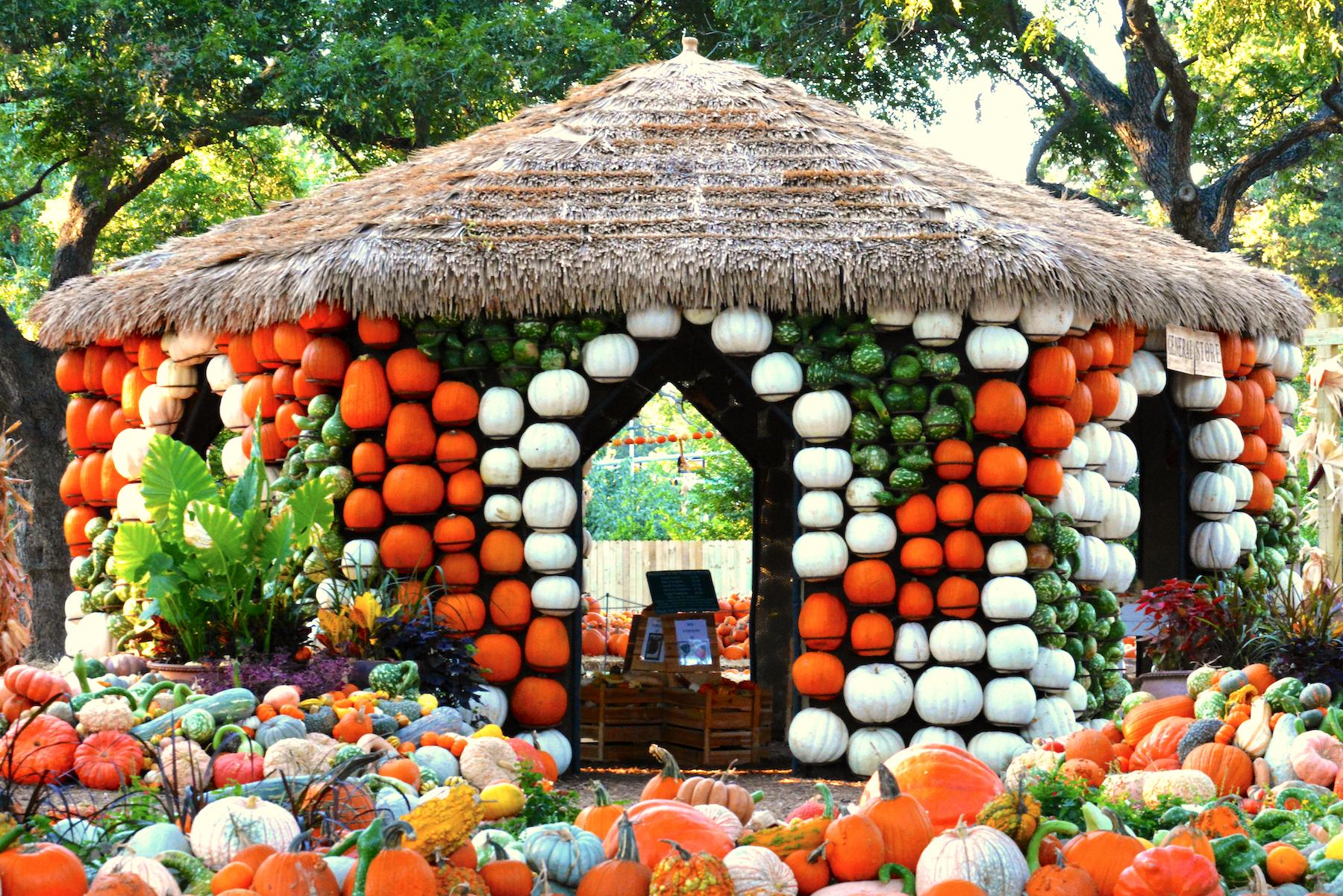 The 2020 Pumpkin Village at the Dallas Arboretum.