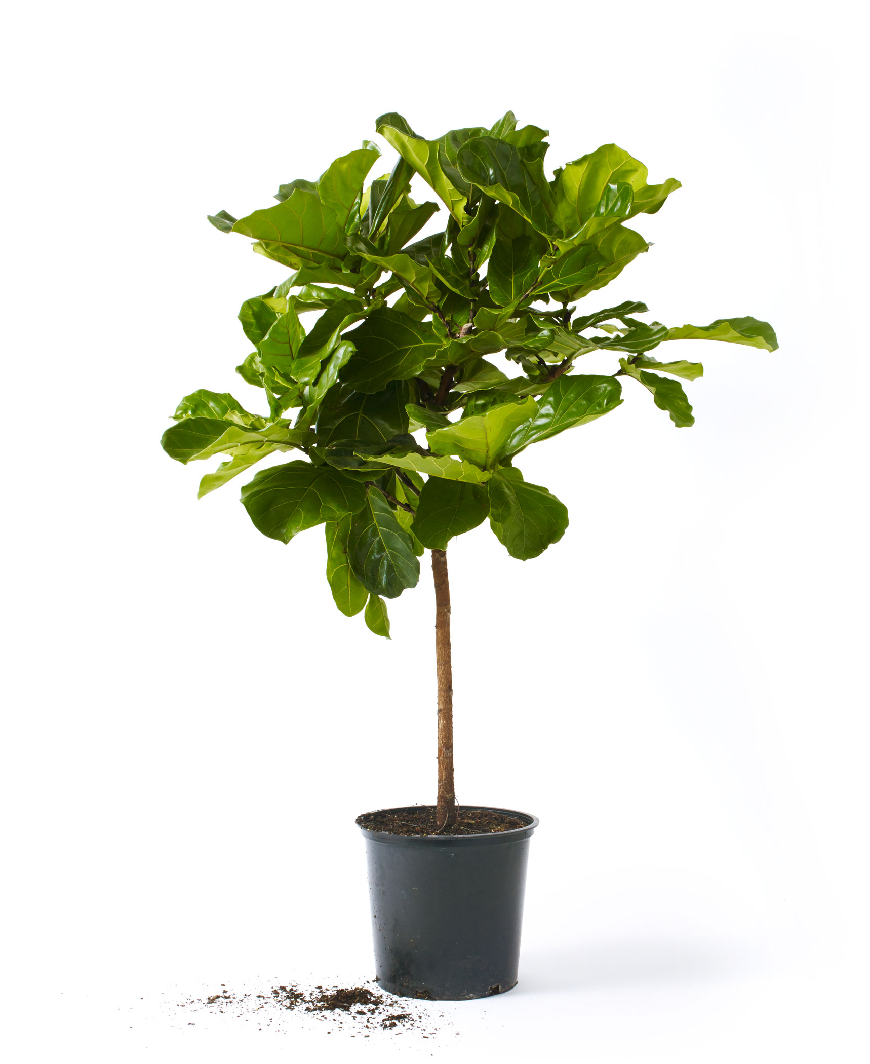 Why Houseplants Are Having a Revival - D Magazine on order birds of paradise plant, zamiifolia house plant, spider house plant, fig house plant, houseplants plant, croton house plant, banana house plant, cast iron plant, rubber house plant, hydrangea house plant, peperomia house plant, fern house plant, zi zi plant, arrowhead house plant, umbrella house plant, avocado house plant, eternity plant, house plant identification succulent plant,